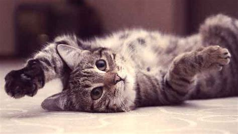 high white blood cell count in dogs what is a high white blood cell count in cats petcarerx