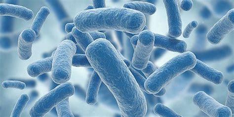 Bio Chemical klebsiella pneumoniae biochemical characteristics