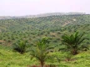 Minyak Kelapa Per Liter Tahun earth needs help lahan perkebunan kelapa sawit rebut