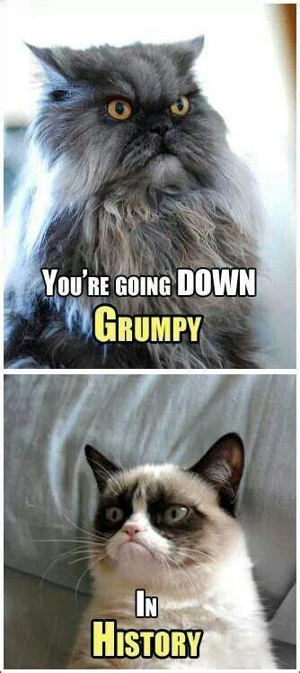 Colonel Meow Memes - 115 best images about grumpy cat on pinterest grumpy cat