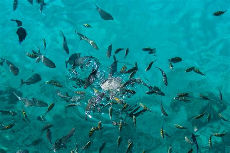 file fishes at west view 8333599404 jpg wikimedia commons