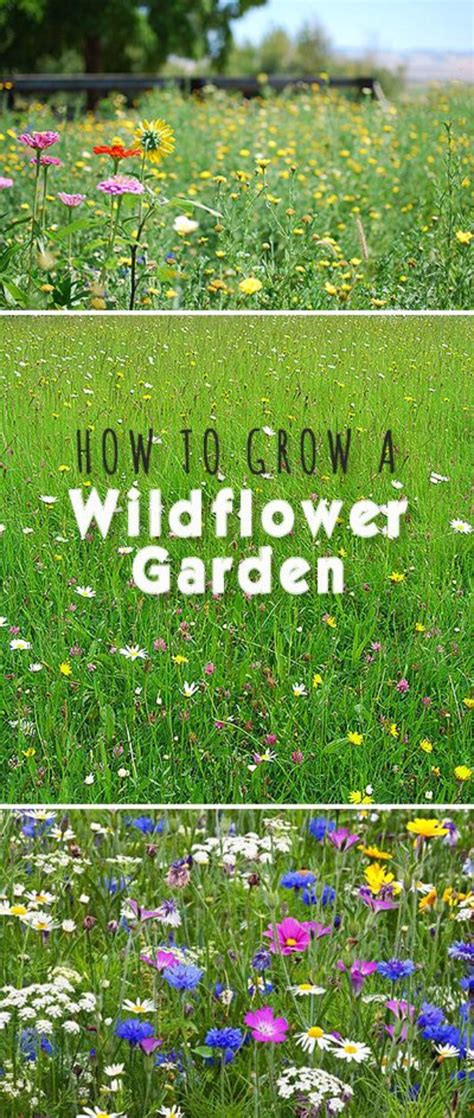 growing wildflowers in backyard 31 awesome diy tips for spring gardening page 4 of 7