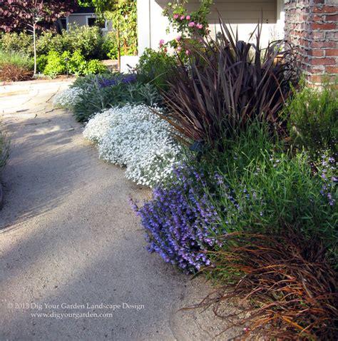 plant combinations northern california gardens mediterranean landscape san francisco