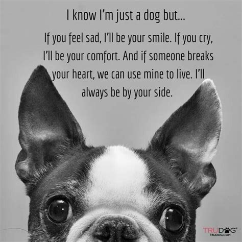 puppy sayings pet quotes poems and sayings a collection of animals