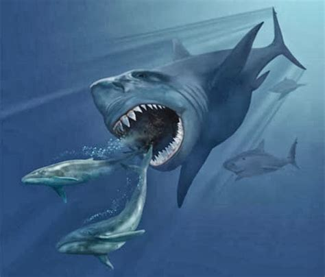 megalodon shark size megalodon shark wild life world