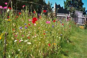 create a wild flower meadow just another wordpress site