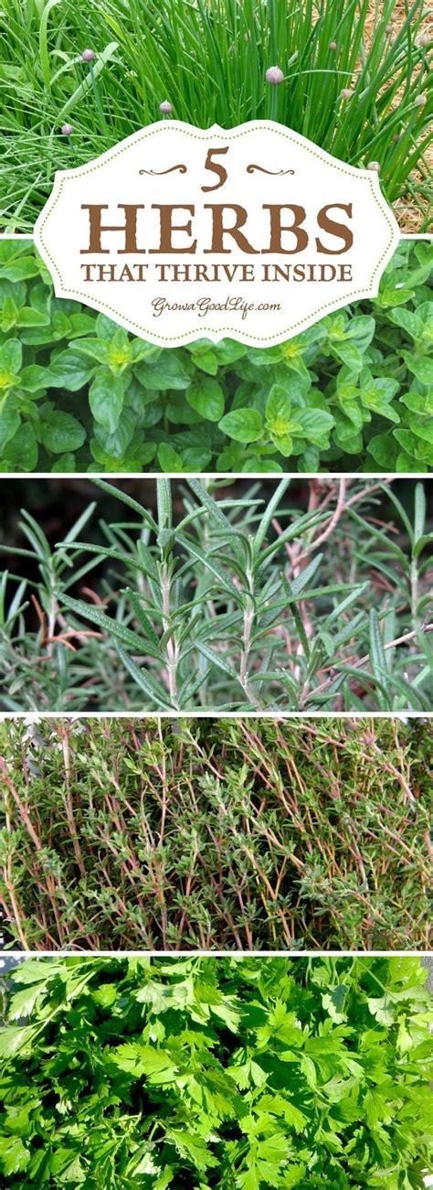 indoor herbs to grow grow herbs indoors 5 herbs that thrive inside gardens