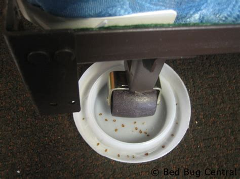 bed bug interceptor diy do bed bugs live in couches home improvement