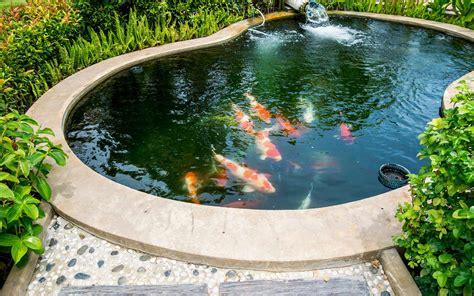 Les Bassins De Jardin by Bassin De Jardin Quand Introduire Des Poissons