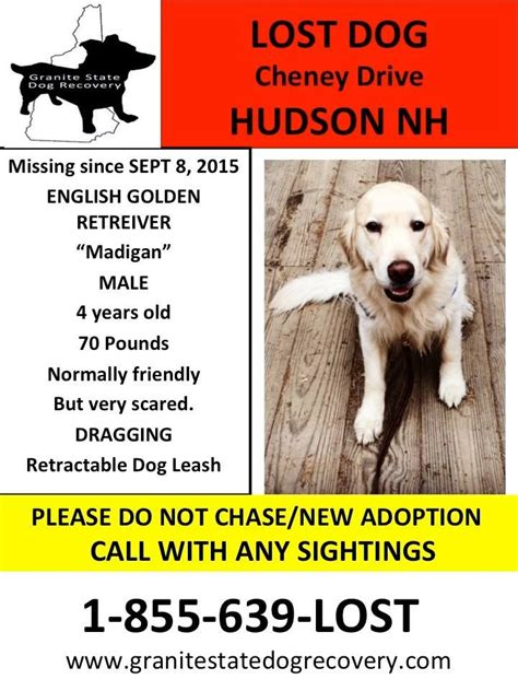 granite state recovery 120 best lost and found dogs goldens labs retrievers mastiffs mixes images on