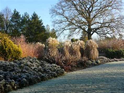 Winter Garden News by Your Hshire The News From Your County Council Clanfield