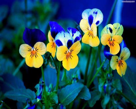 desktop gratis fiori sfondo quot sfondi natura 46 quot 1280 x 1024 natura fiori
