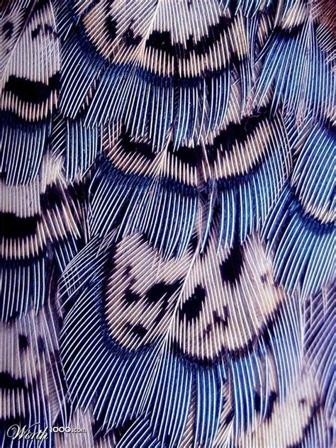 feather pattern tumblr pinterest