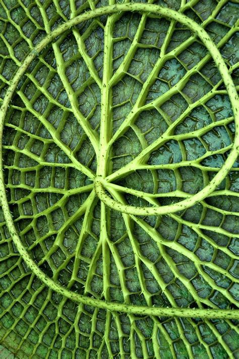 texture leaf pattern aquatic plant macro natural texture pattern green leaf