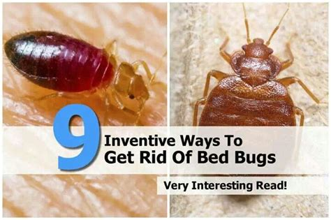 get rid of bed bugs eww do it yourself pinterest