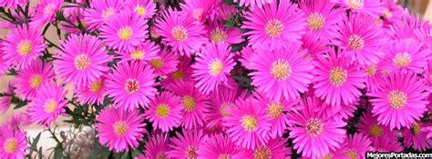 imagenes de flores bonitas para portada portadas facebook timeline biograf 205 a flores rosas