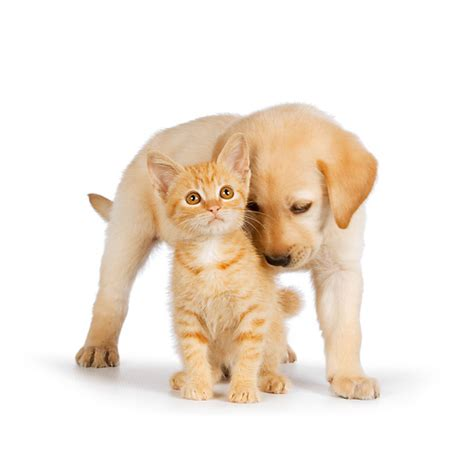 rk puppies animal stock photos kimballstock