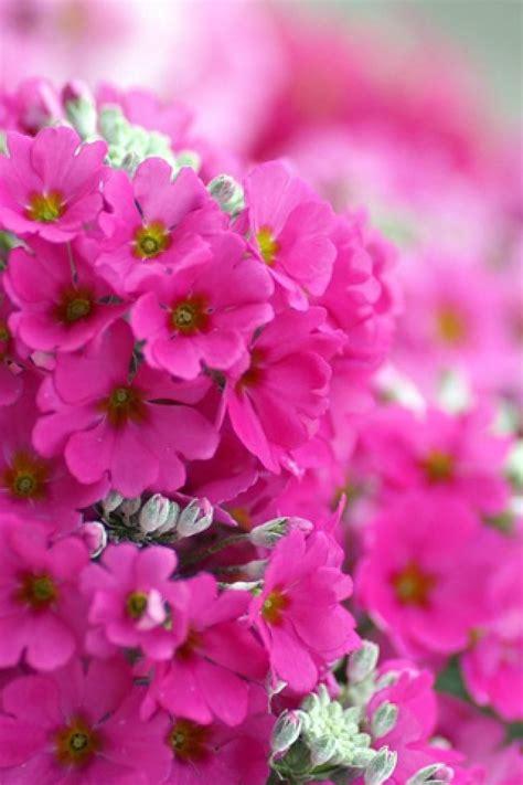 spring flowers hd wallpaper wallpapersafari