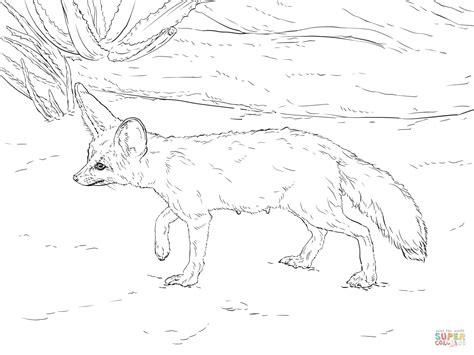 desert fox coloring page coloriage fennec curieux coloriages 224 imprimer gratuits