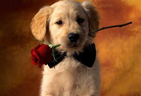 pet valentines houston spca tips for a pet safe s day the