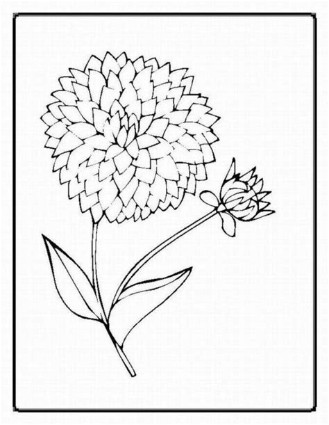 realistic flower coloring page realistic flower coloring pages coloring home