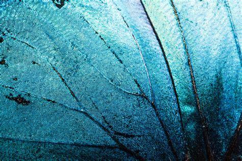 pattern in the nature nature pattern www edoardomoruzzi com