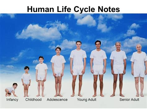 child development from infancy to adolescence an active learning approach obj given notes activity sheet swbat describe the stages