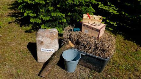 Pilze Im Garten Ziehen by Bequem Und Lecker Pilze Im Garten Z 252 Chten Ndr De