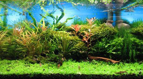 Aquarium Ohne Pflanzen Einrichten 6848 by ᐅ Bodendecker Im Aquarium Top Pflanzen F 252 R Rasen Im Aquarium