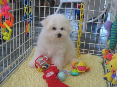 puppy store fort lauderdale puppy boutique store in fort lauderdale fl 33308 citysearch