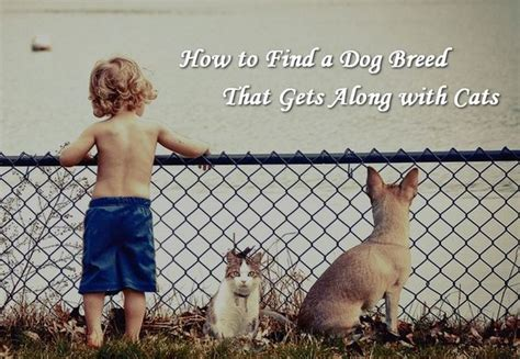 how to find a breeder how to find a breed that gets along with cats modernlifeblogs