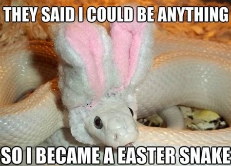 Hilarious Easter Memes - funny easter snake meme jokes 2014