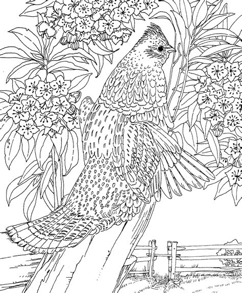 coloring pages of state birds and flowers free printable coloring page pennsylvania state bird and