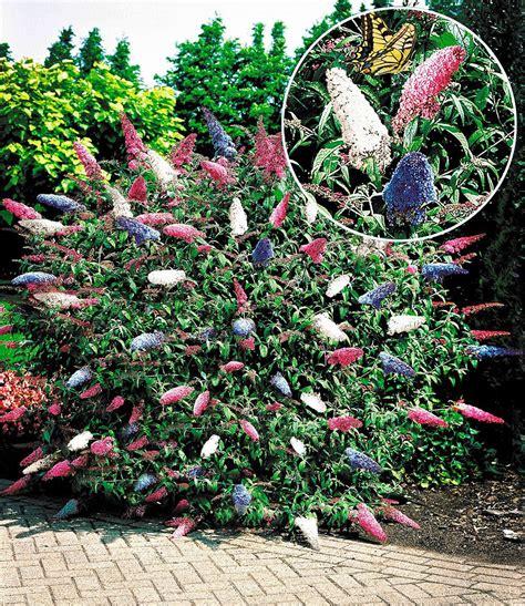 garten pflanzen bestellen bl 252 ten str 228 ucher kollektion 2 pflanzen g 252 nstig