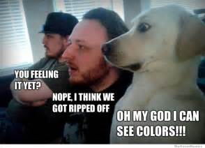 what colors do dogs see best overwhelmed weknowmemes