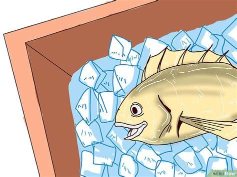 Cat Fish Untuk Curan Umpan Lele 3 cara untuk menangkap ikan lele wikihow