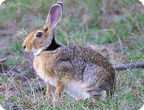 imagenes de animales de zacatecas fuente el saz de jarama