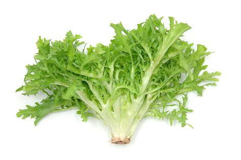 tucson community supported agriculture 187 blog archive 187 about endive escarole frisee