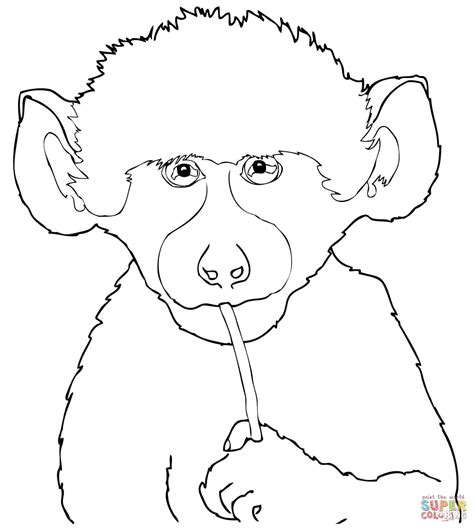 cute baby baboon coloring page free printable coloring pages