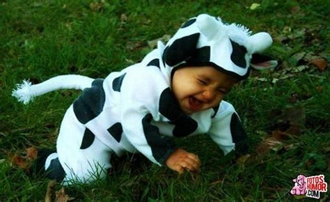 imagenes graciosas vacas fotos de vacas graciosas imagui