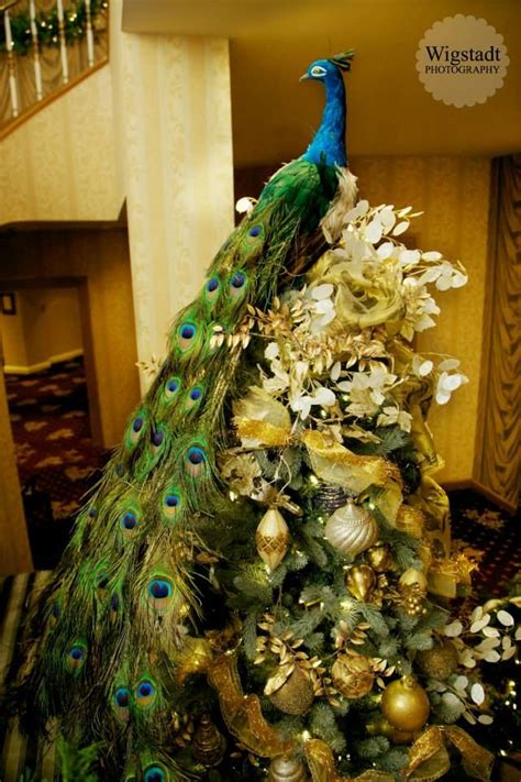 17 best images about peacock christmas on pinterest