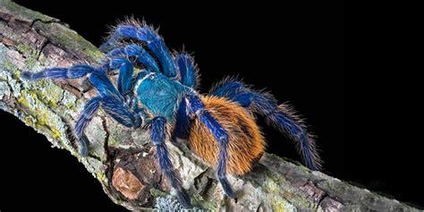 animali piccoli da tenere in casa come allevare ragni fare di una mosca