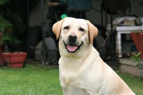 pomeranian puppy price in delhi pomeranian dogs price list in india