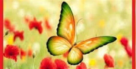 imagenes bellas de xenr imagenes de mariposas bellas imagenes de mariposas