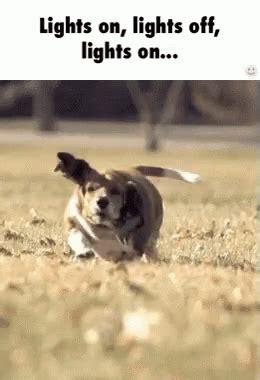 Fat Dog Gif Fat Dog Run Discover Share Gifs Lights Gif