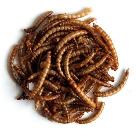 dried mealworms dried mealworms bird food farbrook farm