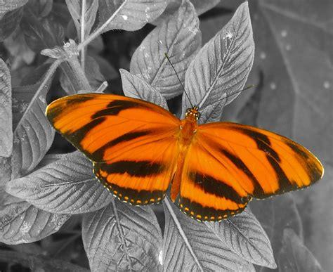 orange and white l color pops naomilgall