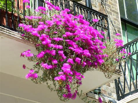 balcony flowers balcony flowers design image decosee com