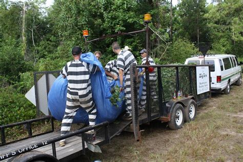 Polk County Arrest Records Marijuana Grow Operation In Worth 175 Million Thc
