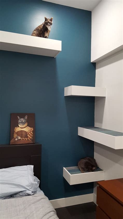 25 best ideas about cat shelves on cat wall cat